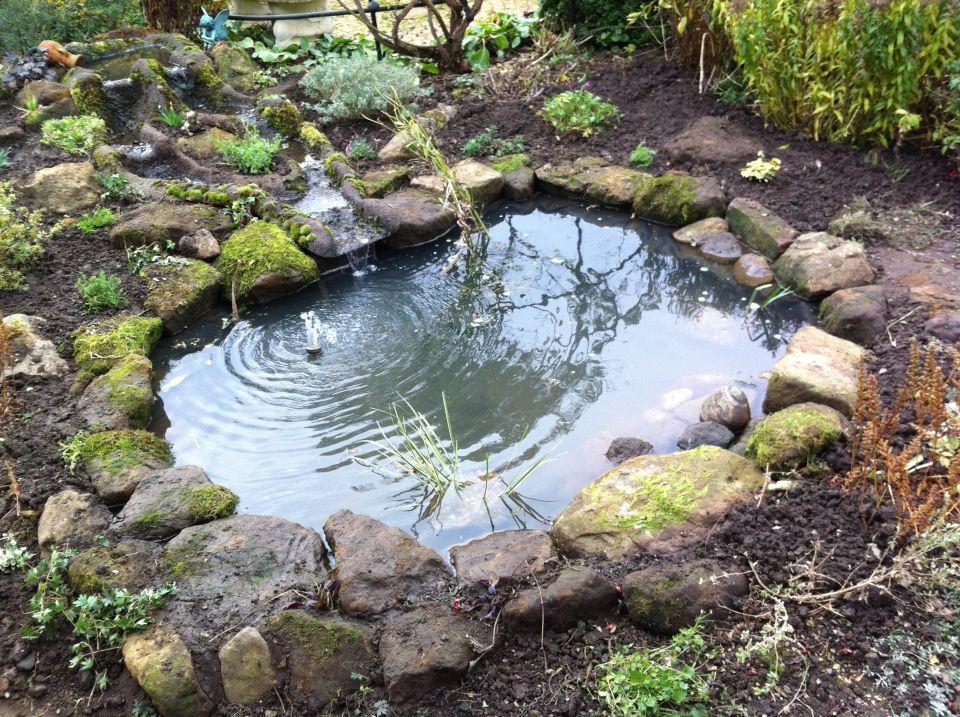 Holiday club dens ponds wildwood days for Garden pond design books